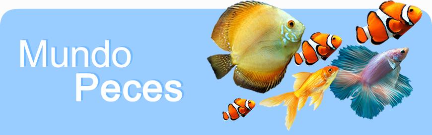 mundo_peces_banner.jpg