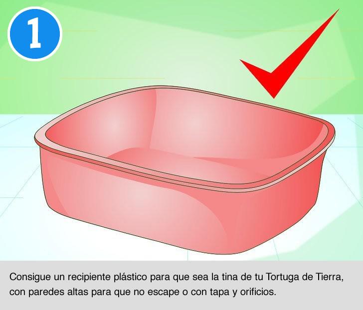 Cómo bañar a tu Tortuga de Tierra - Parte 1