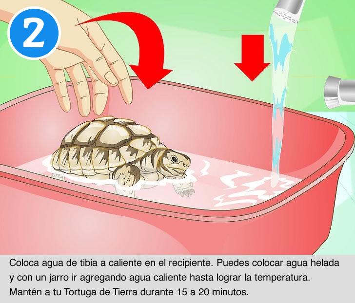 Cómo bañar a tu Tortuga de Tierra - Parte 2