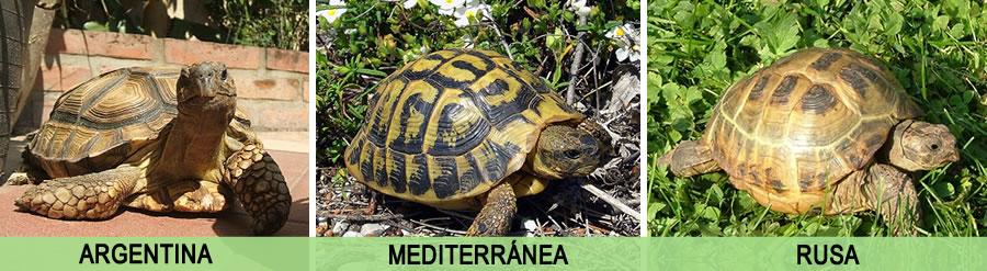 Diferencias entre las especies de Tortugas de Tierra