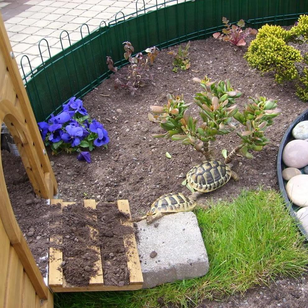 Tortuga de Tierra en el jardín