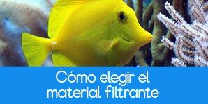 Blog Mascotas Cómo elegir el material filtrante para tu acuario