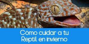 Cómo cuidar a un reptil en invierno