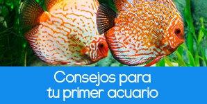 Blog Mascotas Consejos para tu primer acuario