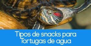 Las mejores golosinas para Tortugas Semiacuáticas
