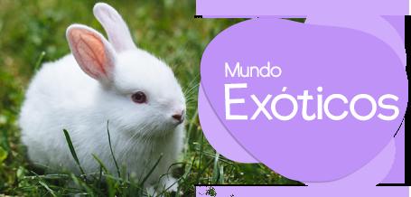 Productos para Mascotas Exóticas