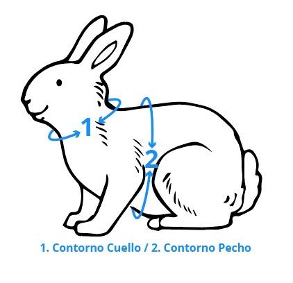 Cómo medir a tu pequeña mascota