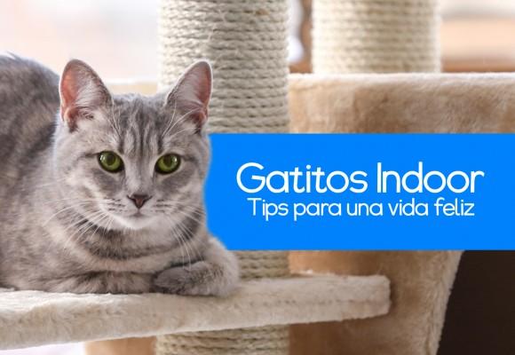 5 Consejos para Gatos Indoor