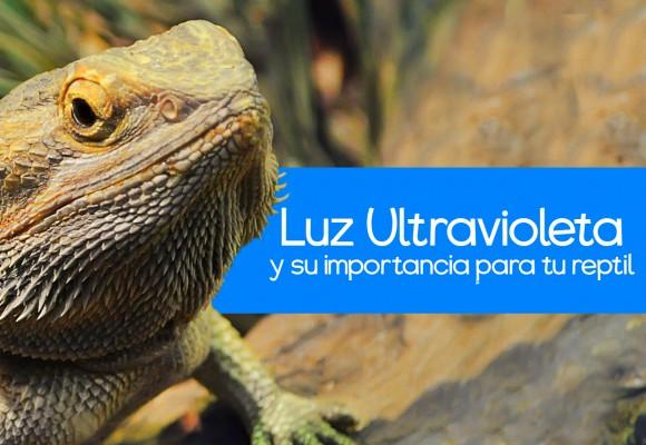 La Luz UV en tus Reptiles
