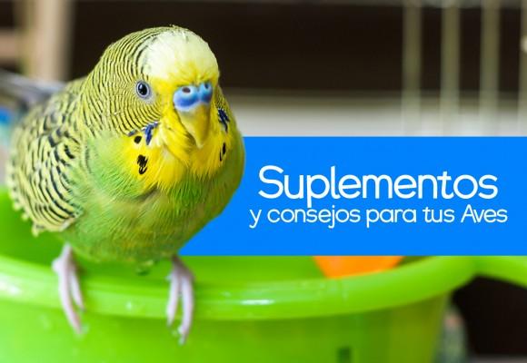 Suplementos y Consejos para Aves