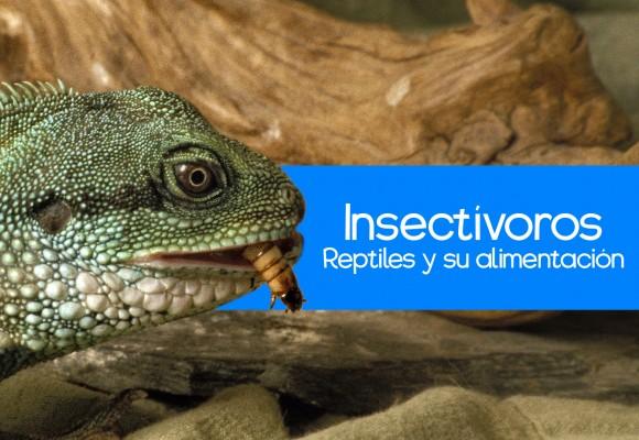 La alimentación de reptiles insectívoros