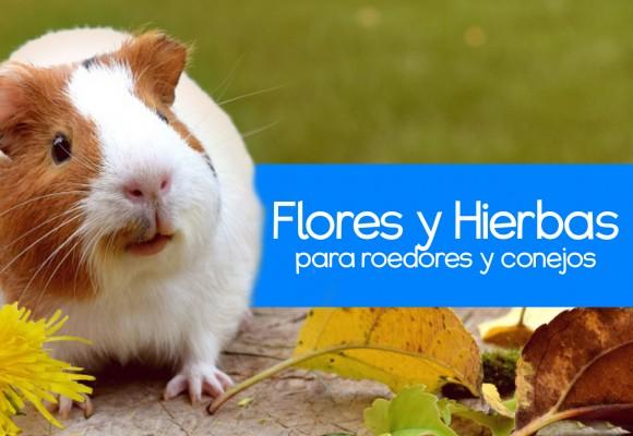 Flores y Hierbas para Roedores y Conejos