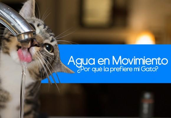 Los Gatos y el agua en movimiento