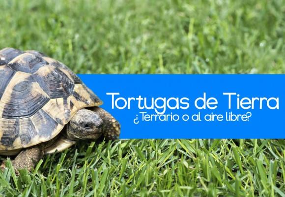 Consejos para Tortugas de Tierra