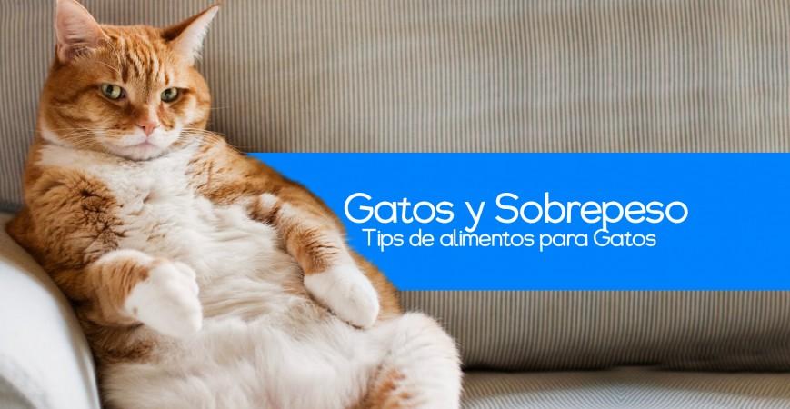 El sobrepeso en los gatos