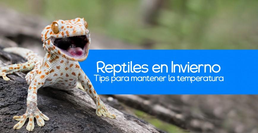 Cómo cuidar a tu Reptil en Invierno