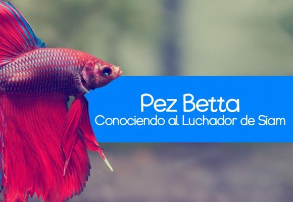 Conociendo al Pez Betta